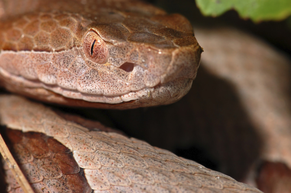 How To Get Rid Of Snakes, Snakes In Yard - Copperhead ...