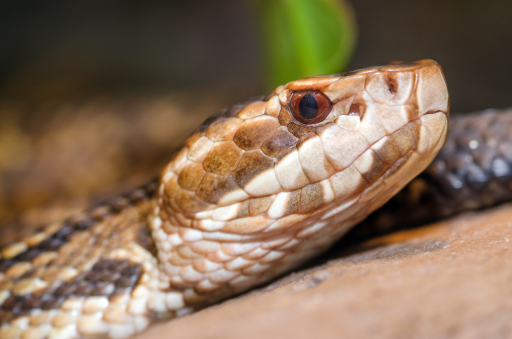 how to tell if your snake is shedding