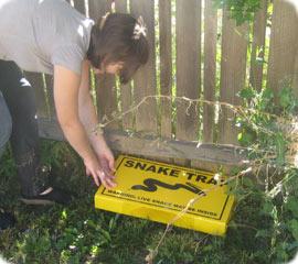 setting a snake trap