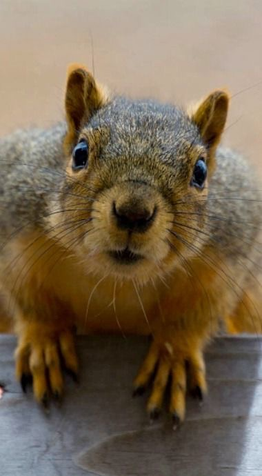How To Get Rid Of Squirrels In Your Attic Virginia
